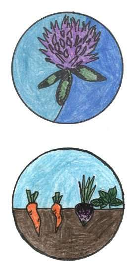 Craftsbury Farmers Market logo competition honorable mention - Ruth Krebs