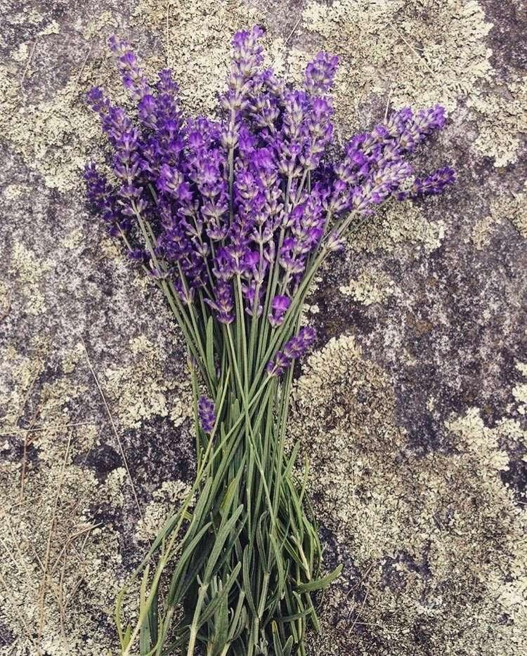 Wilson Herb Farm - Lavender - Craftsbury Farmers Market