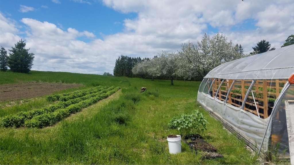 Newfield Herb Farm - Culinary & Medicinal Herbs - Albany VT
