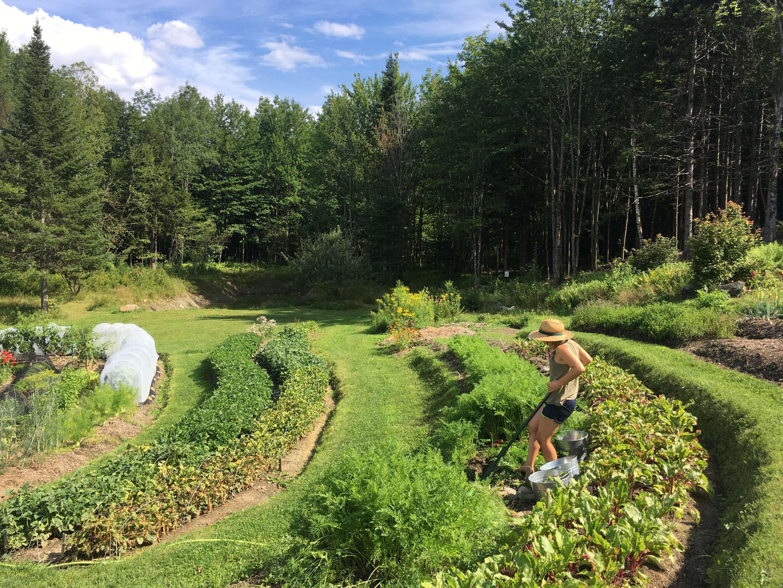 Hawthorn Meadow Farmstead ecological market garden